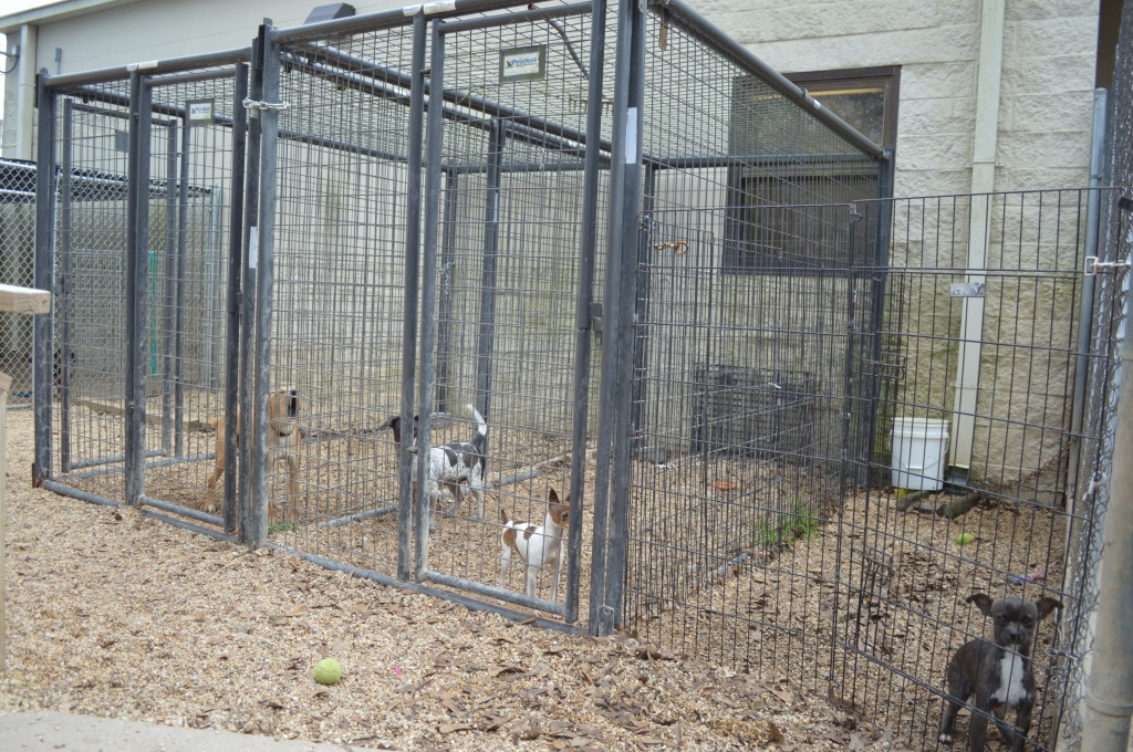 three dogs contained in cages outside with a small amount of room to move around.